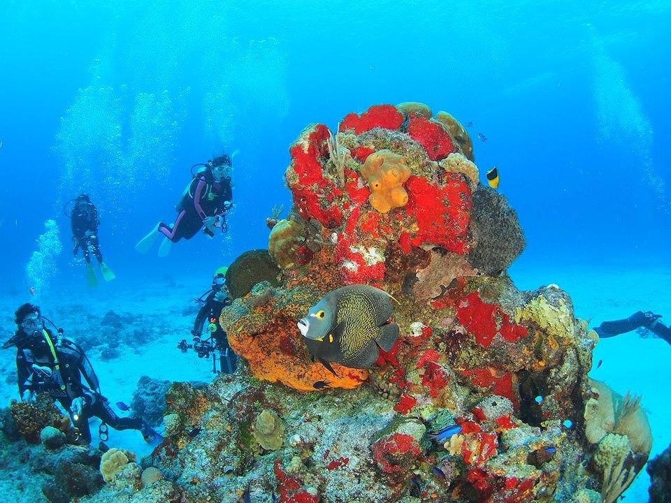 メキシコダイビング セノーテ セノーテダイビング 神秘の泉 カリブ海 茨城ダイビング クレセント