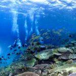 沖縄ダイビング ケラマダイビング ケラマブルー サンゴ礁 茨城ダイビング いわきダイビング クレセント