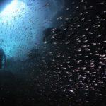 熱海ボートダイブ 沈船ダイブ 洞窟ダイブ 茨城スキューバ いわきスキューバ クレセント