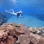沖縄ダイビング ケラマダイビング サンゴ礁 沖縄グルメ 茨城ダイビング いわきダイビング クレセント 水中写真 オリンパス
