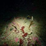 西伊豆ダイビング 浮島ダイビング ダイビングライセンス Cカード取得 茨城ダイビング いわきダイビング クレセント サンセットリゾート