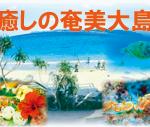 大人の休日 奄美大島ダイビング 美味しい食事 JALファーストクラス監修 茨城 クレセント