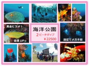 海洋公園 ダイビング 東伊豆 人気ポイント 茨城 クレセント IOP