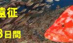 南紀 串本 ダイビング 赤鯱 茨城 クレセント