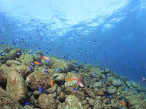 伊豆ダイビング ベストシーズン 大瀬崎 海がキレイ 茨城 クレセント
